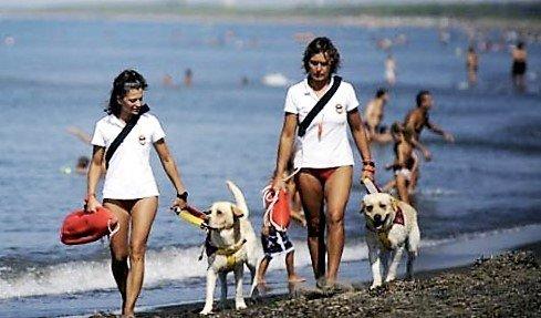 scuola italiana cani salvataggio